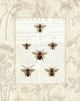 Bee Botanical Fine Art Print