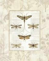 Dragonfly Botanical Fine Art Print