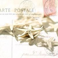 Postal Shells II Framed Print