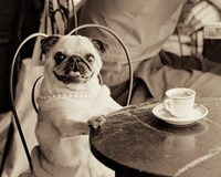 Cafe Pug by Jim Dratfield - various sizes