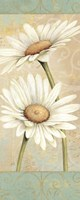 Beautiful Daisies II by Daphne Brissonnet - various sizes
