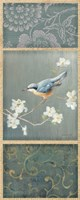 Nuthatch by Danhui Nai - various sizes - $25.99