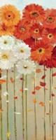 Daisies Fall II by Danhui Nai - various sizes