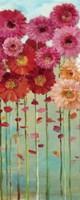 Daisies Spring II by Danhui Nai - various sizes
