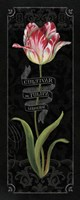 Tulipa Botanica III by Lisa Audit - various sizes - $25.99