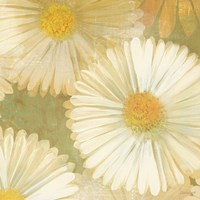 Daisy Story Square I by Kathrine Lovell - various sizes