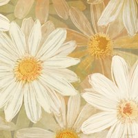 Daisy Story Square II by Kathrine Lovell - various sizes