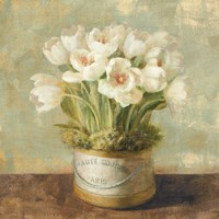 "28"" x 28"" White Tulips"