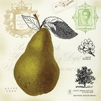 Pear Notes by Mousseau - various sizes