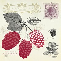 Raspberry Notes by Mousseau - various sizes