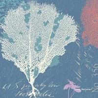 Coral on Blue Fine Art Print