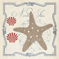 Pacific Starfish by Mousseau - various sizes