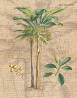 Palm Study I Framed Print
