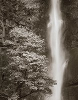 """16"""" x 20"""" Waterfall Pictures"""