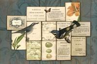 Birds of the Garden by Sue Schlabach - various sizes - $36.99