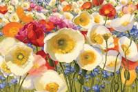 Sunny Abundance Fine Art Print