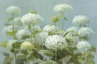 White Hydrangea Garden Framed Print