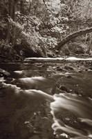 Whatcom Creek by Alan Majchrowicz - various sizes