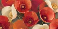 Poppies Bloom I Fine Art Print