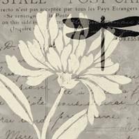 Natural Prints II by Daphne Brissonnet - various sizes