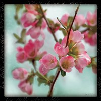Quince Blossoms II by Sue Schlabach - various sizes, FulcrumGallery.com brand