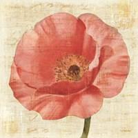 Blushing Poppy on Cream by Albena Hristova - various sizes