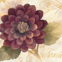 Abundant Floral II Fine Art Print