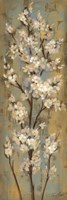 Almond Branch II Fine Art Print