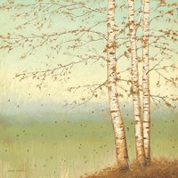 Golden Birch II with Blue Sky by James Wiens - various sizes