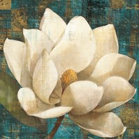 Magnolia Blossom Turquoise by Albena Hristova - various sizes, FulcrumGallery.com brand
