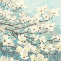 Dogwood Blossoms II Fine Art Print