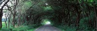"Road Through Trees Marion County, Illinois, USA by Panoramic Images - 27"" x 9"", FulcrumGallery.com brand"