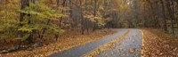 "Road passing through autumn forest, Great Smoky Mountains National Park, Cherokee, North Carolina, USA by Panoramic Images - 27"" x 9"", FulcrumGallery.com brand"