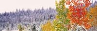 Winter Aspens USA