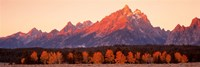 "Aspens, Teton Range, Grand Teton National Park, Wyoming, USA by Panoramic Images - 27"" x 9"""