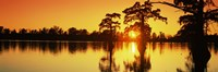 "Cypress trees at sunset, Horseshoe Lake Conservation Area, Alexander County, Illinois, USA by Panoramic Images - 27"" x 9"""