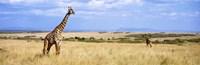 "Giraffe, Maasai Mara, Kenya by Panoramic Images - 27"" x 9"", FulcrumGallery.com brand"