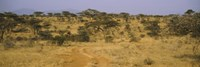 "Trees on a landscape, Samburu National Reserve, Kenya by Panoramic Images - 27"" x 9"" - $28.99"