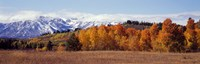 """Autumn Grand Teton National Park WY by Panoramic Images - 27"""" x 9"""""""