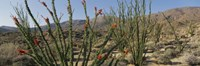 """Ocotillo Anza Borrego Desert State Park CA by Panoramic Images - 27"""" x 9"""""""