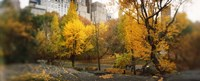 "Autumn trees in a park, Central Park, Manhattan, New York City, New York State, USA by Panoramic Images - 27"" x 9"""