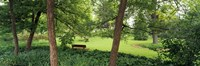 """Trees in a park, Adams Park, Wheaton, Illinois, USA by Panoramic Images - 27"""" x 9"""""""