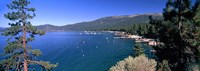 Trees with lake in the background, Lake Tahoe, California, USA Fine Art Print
