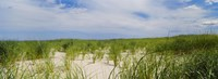 "Sand dunes at Crane Beach, Ipswich, Essex County, Massachusetts, USA by Panoramic Images - 27"" x 9"""