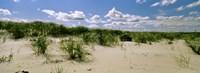 "Grass among the dunes, Crane Beach, Ipswich, Essex County, Massachusetts, USA by Panoramic Images - 27"" x 9"""
