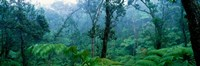 """Trees in a rainforest, Hawaii Volcanoes National Park, Big Island, Hawaii, USA by Panoramic Images - 27"""" x 9"""""""