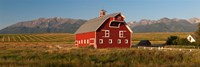 Barn in a field with a Wallowa Mountains in the background, Enterprise, Wallowa County, Oregon, USA Fine Art Print