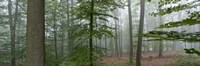 "Trees in fog, Trier, Rhineland-Palatinate, Germany by Panoramic Images - 27"" x 9"""