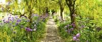 Laburnum trees at Barnsley House Gardens, Gloucestershire, England Fine Art Print