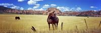 """Horses Grazing at Kolob Reservoir, Utah by Panoramic Images - 27"""" x 9"""" - $28.99"""